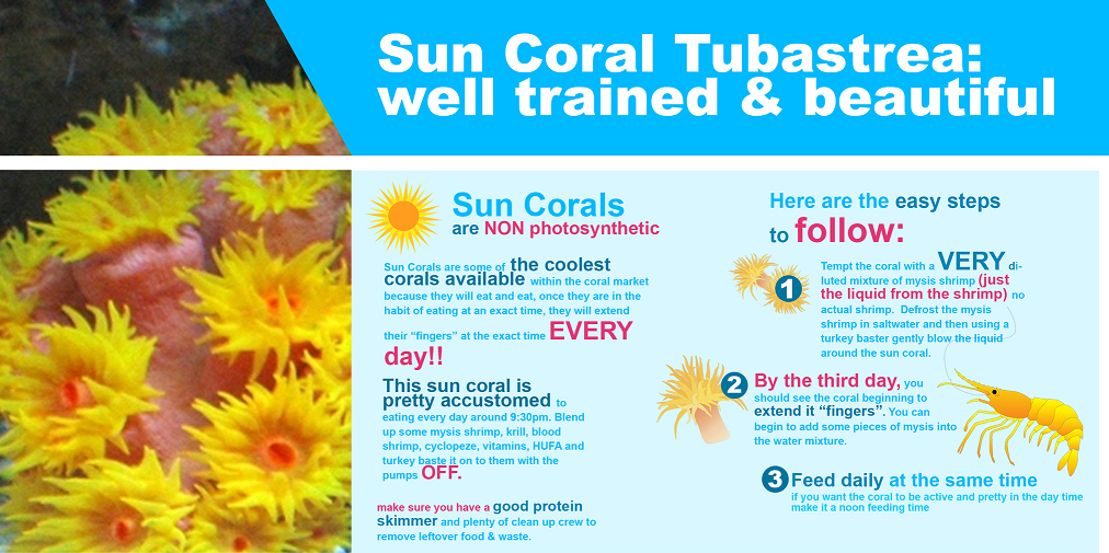 SunCoral Care Sheet