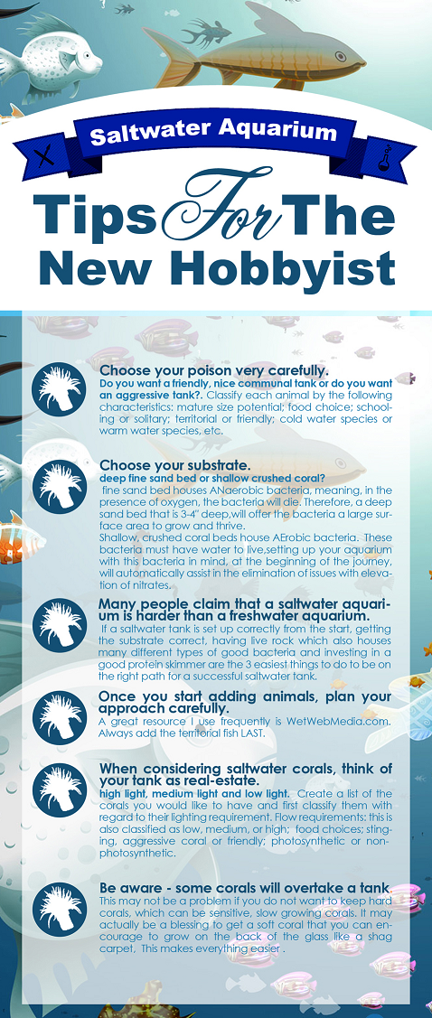 Tips For Saltwater Aquarium