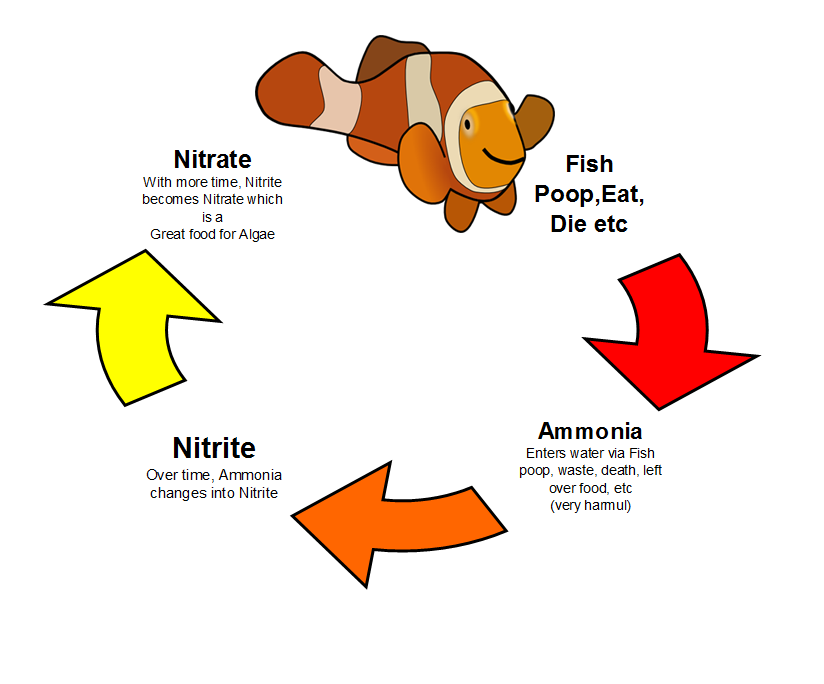 Saltwater Aquarium Snails … Algae Eaters vs Detritus Eaters