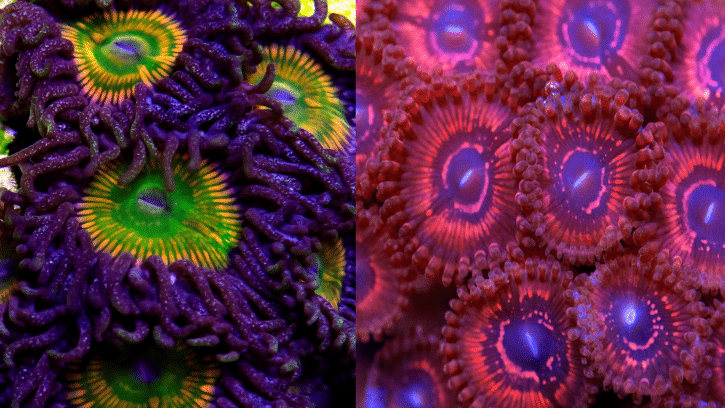 Not feeding your Corals ? We break it down so you can fatten them up! A fat coral is a happy coral!
