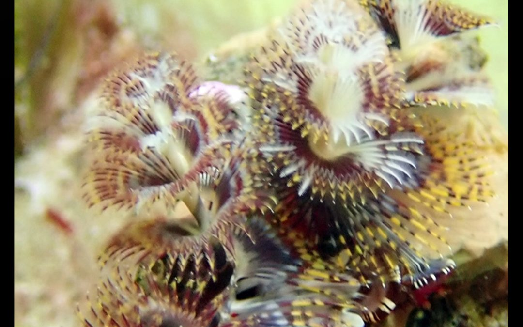 Some of our favorite saltwater reef pictures for marketing and viewing