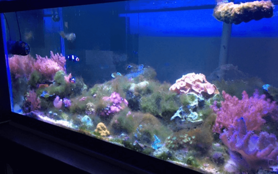 Controlling Algae in Your Aquarium: An Expert's Guide