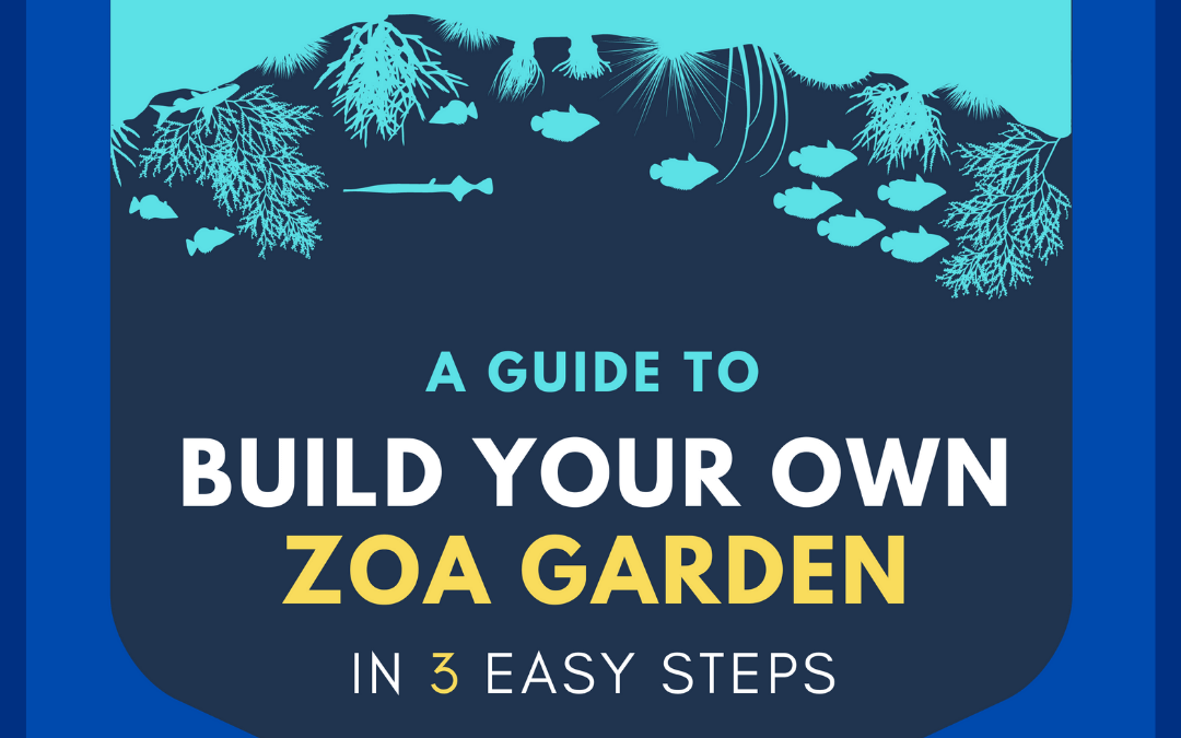 Step-By-Step Guide For The Perfect Zoanthid Garden In Your Saltwater Aquarium