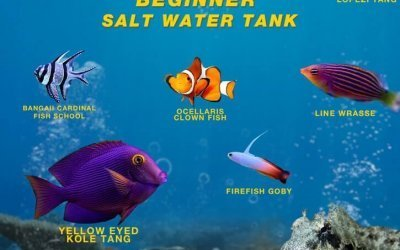 Top 10 Saltwater Aquarium Fish For Beginners – Complete Guide
