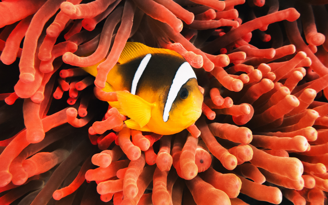 Clownfish And Anemone: A Great Marine Friendship