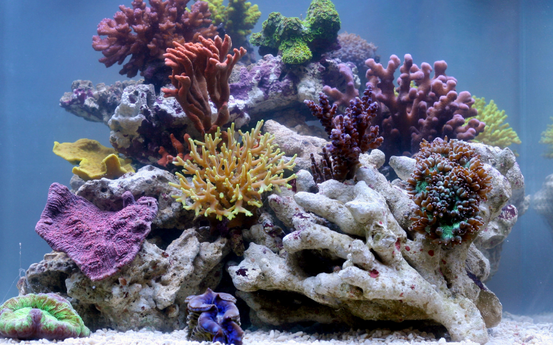 Best Fish Species For Small Saltwater Aquariums