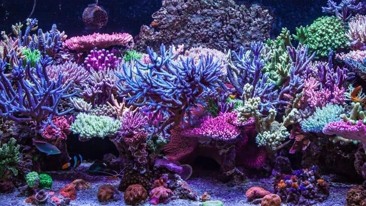 Top 3 Tank Cleaning Fish for Saltwater Aquariums
