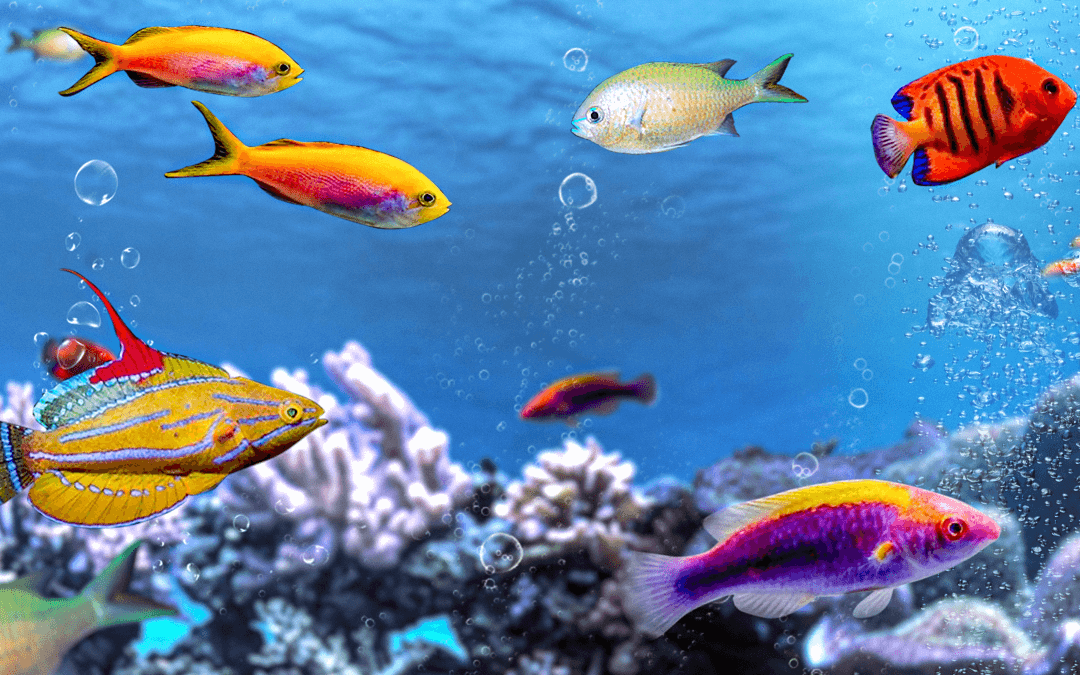 5 Best Top Dwelling Fish For Your Saltwater Aquarium