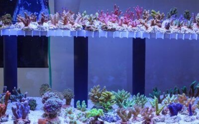 How To Acclimate Coral To Your Saltwater Aquarium