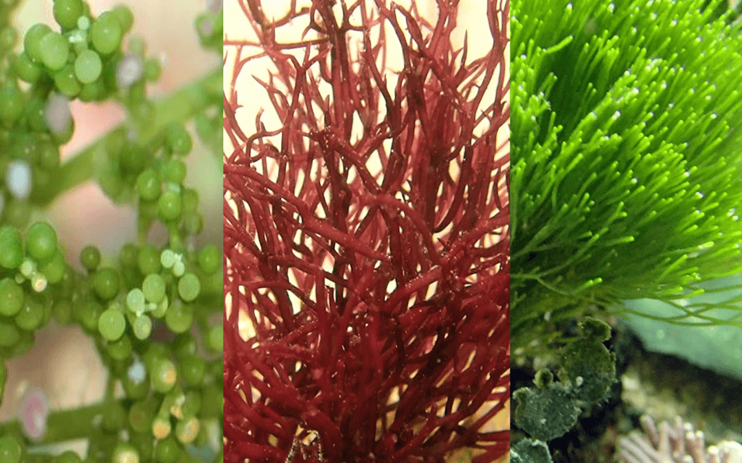 5 Top Live Plants for Saltwater Aquariums
