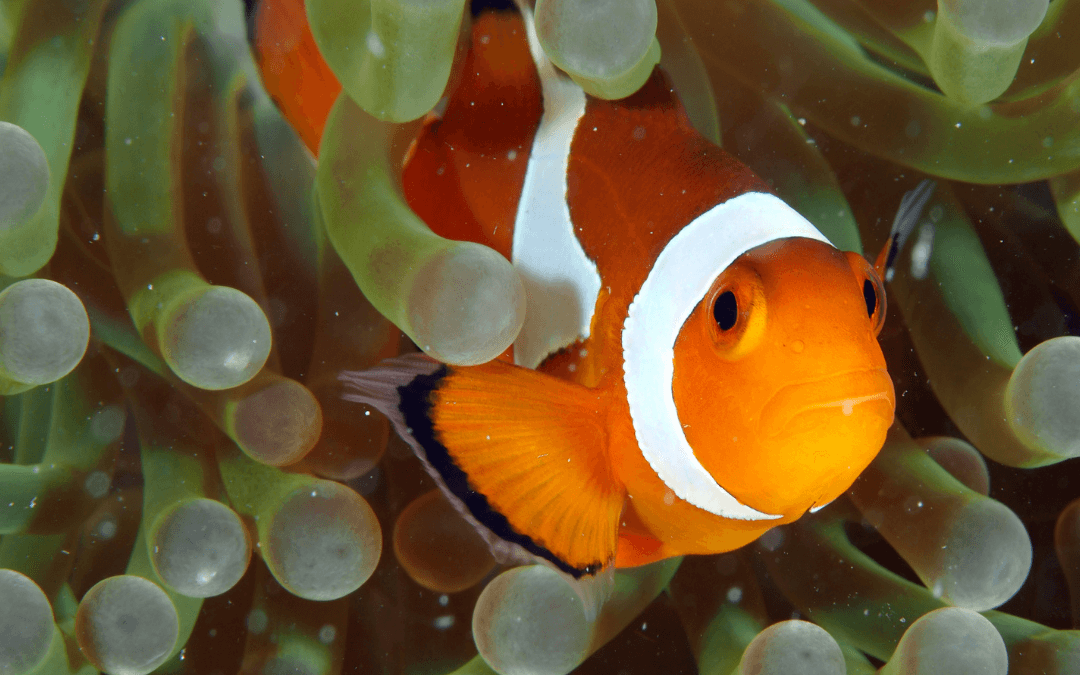 5 Top Tips to Keep Your Anemones Happy