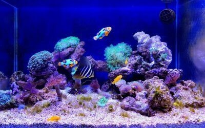 The Benefits Of Starting An Aquarium