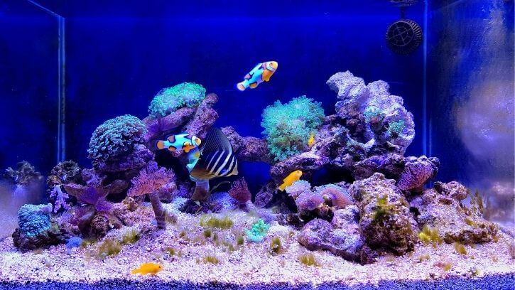 How To Acclimate Saltwater Aquarium Fish To A New Tank