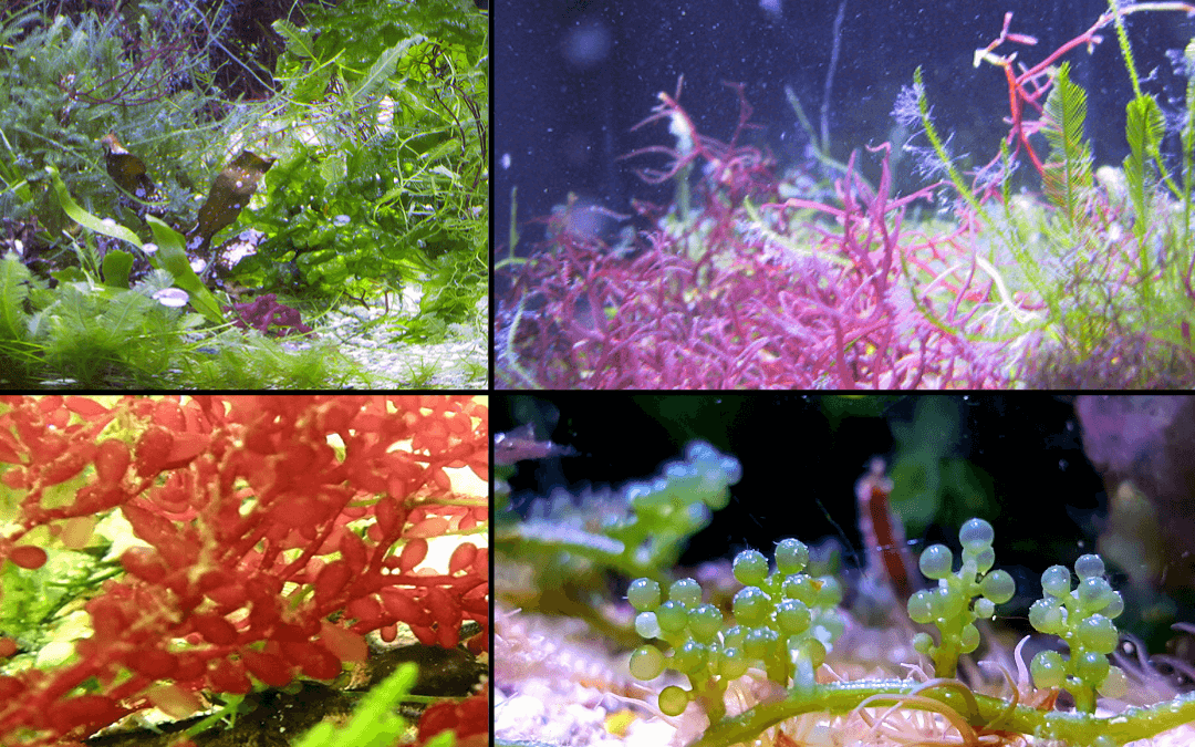 How To Set Up The Perfect Refugium In Your Tank