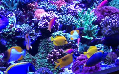 How To Encourage Shy Fish Out From The Rockwork