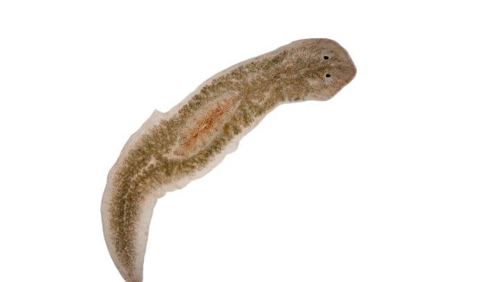 How To Get Rid Of Flatworms In Saltwater Aquariums