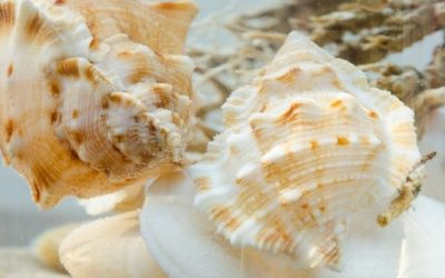 Why Is It Important To Add Empty Shells To Your Aquarium?