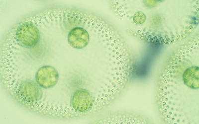 The Importance Of Phytoplankton in Saltwater Aquariums