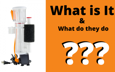 What are Protein Skimmers and Are They Necessary for Aquariums?