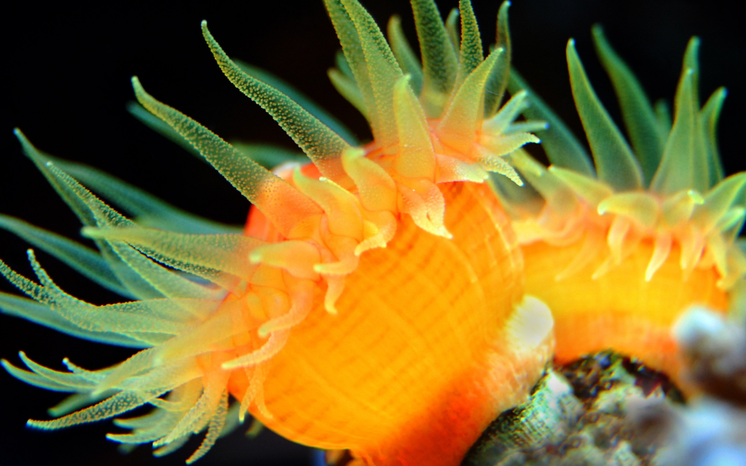 3 Best Beautiful and Rare Corals for Your Saltwater Aquarium