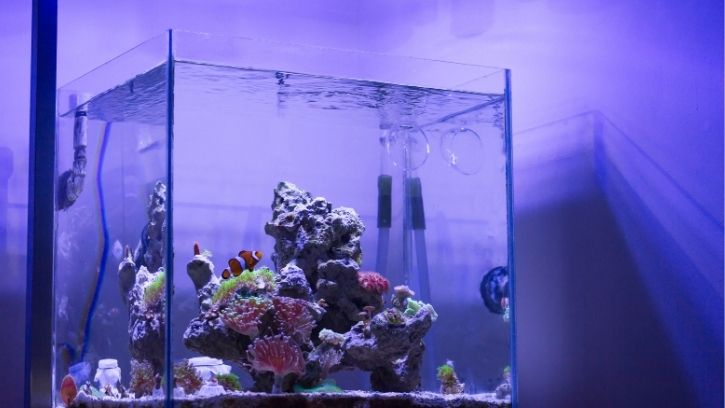 The Importance Of A Quarantine Tank
