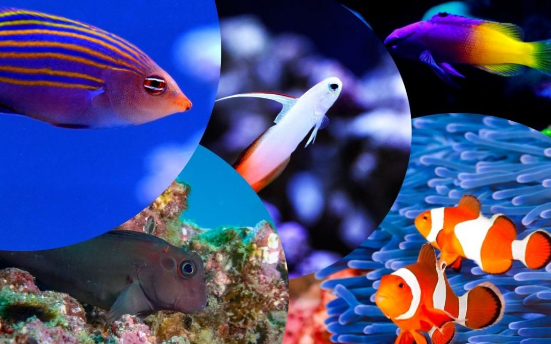 5 Amazing Fish For Your Saltwater Nano Tank