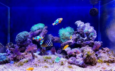 Five Must-know Tips Before You Buy Your First Saltwater Aquarium