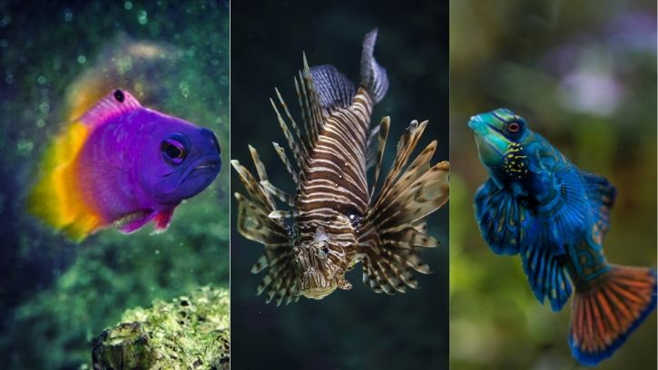 3 Unique Fish for Saltwater Aquariums