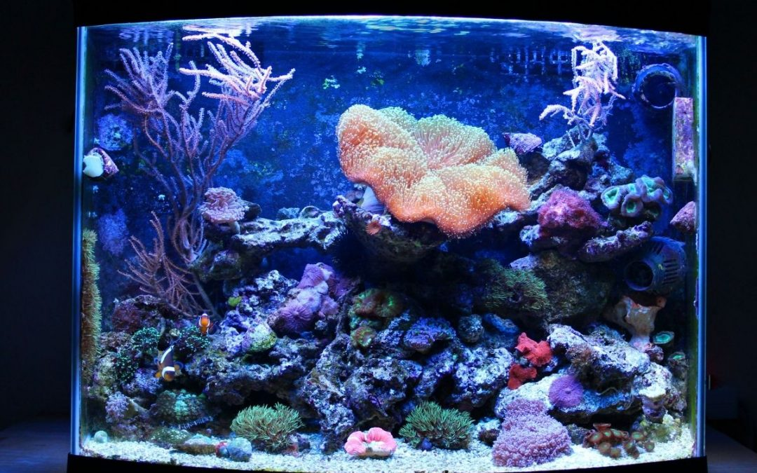 How To Start An Aquarium: Complete Guide