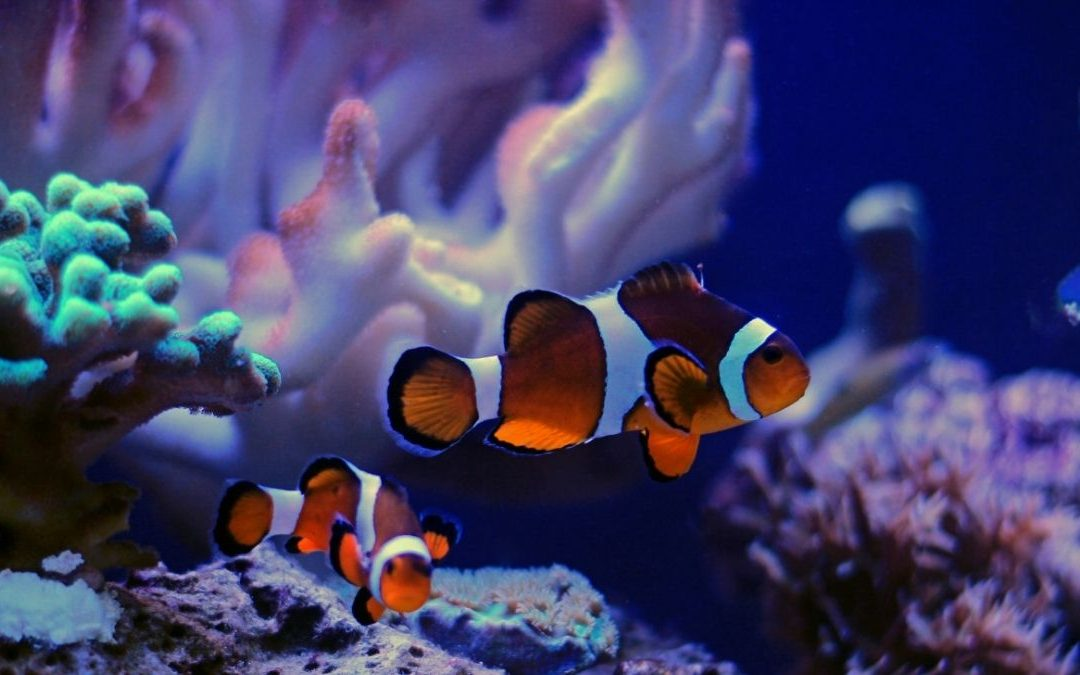Coral Friendly Fishes: Selecting Fishes for your Reef Aquarium