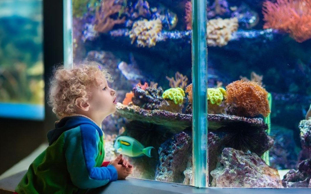 Stress and Fish Health: Tips For a Peaceful Aquarium