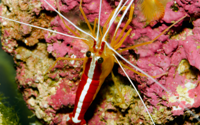 5 Best Inverts for Beginner Saltwater Aquariums