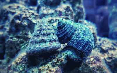 3 Best Snails For Saltwater Aquarium
