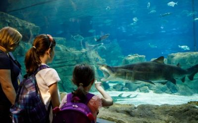 The Many Benefits of Aquariums As A Teaching Tool