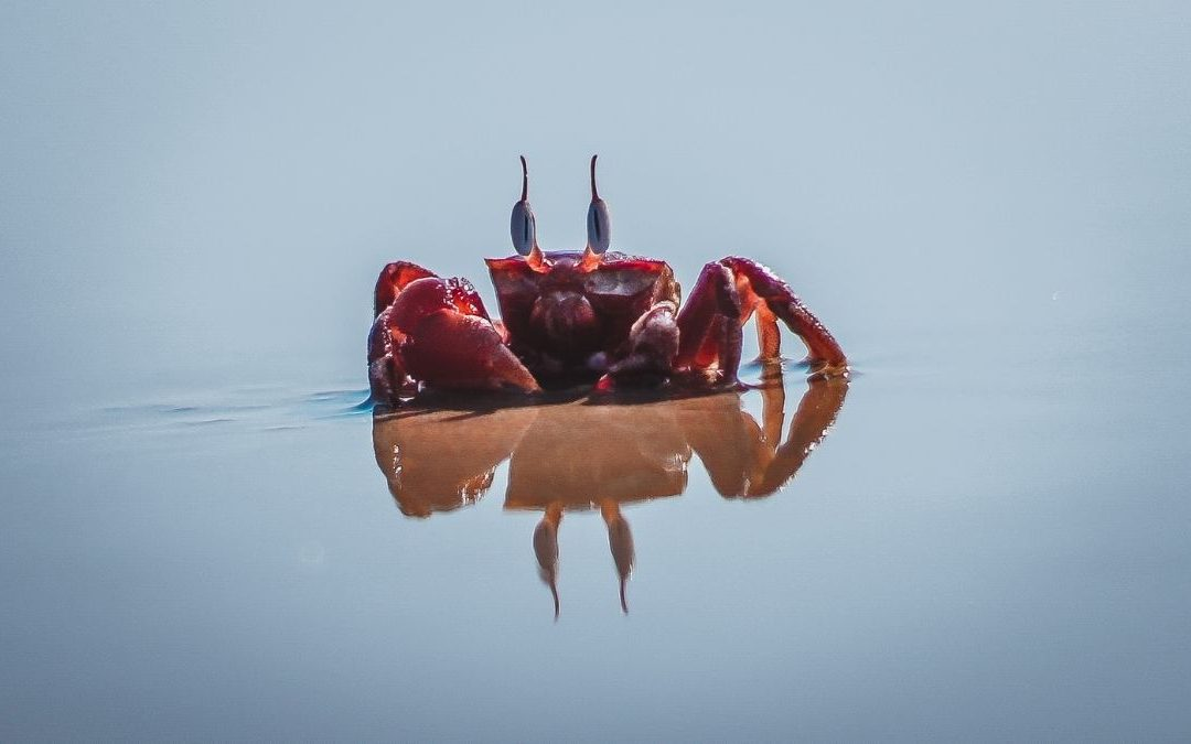 The Fascinating World of Crustaceans – Species Feature